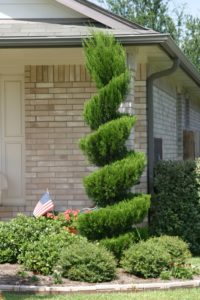 Topiary pruning example