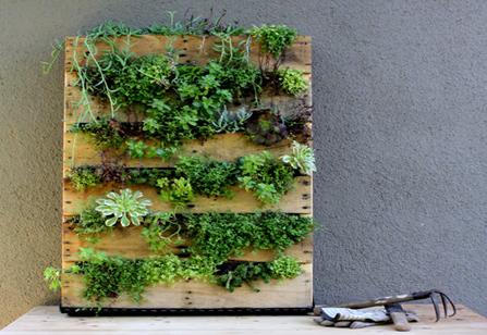 Vertical garden created from a wooden pallet